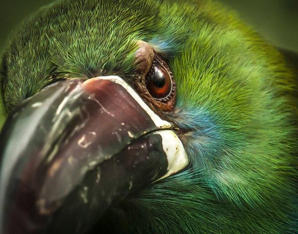 Фото участника Ivan Romero. National Geographic Photo Contest 2013