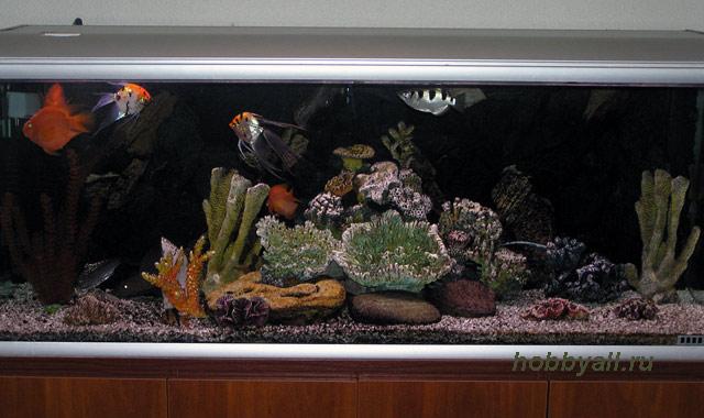Хобби – аквариумистика