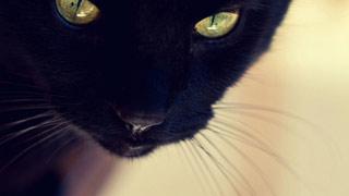 Вышивание крестиком. Черный кот: взгляд