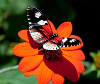 Вышивание крестиком. Бабочка на оранжевом цветке