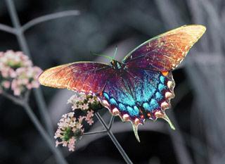 Вышивание крестиком. Бабочка разноцветная