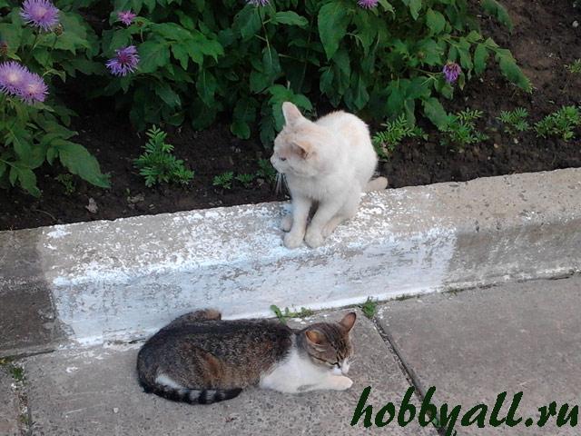 Кот и кошка на прогулке