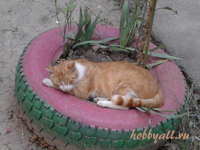 Одесский кот дворянской породы
