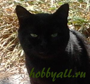 Дворовые кошки: фото из Одессы