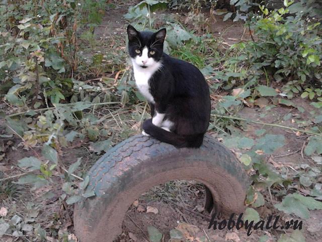 Одесский дворовой кот