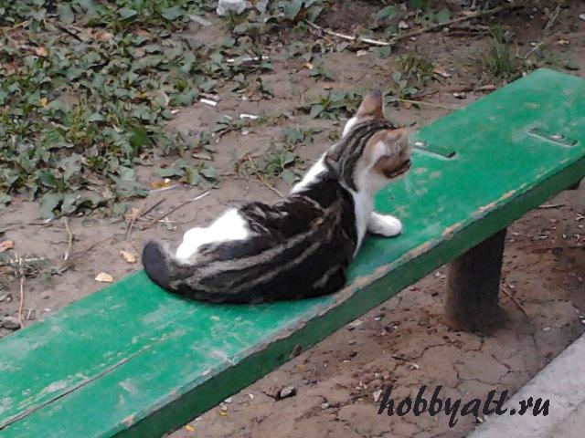 Одесские дворовые коты