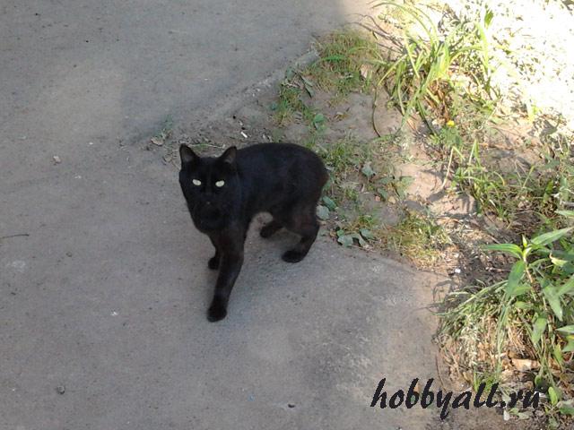 Одесские коты дворянской породы