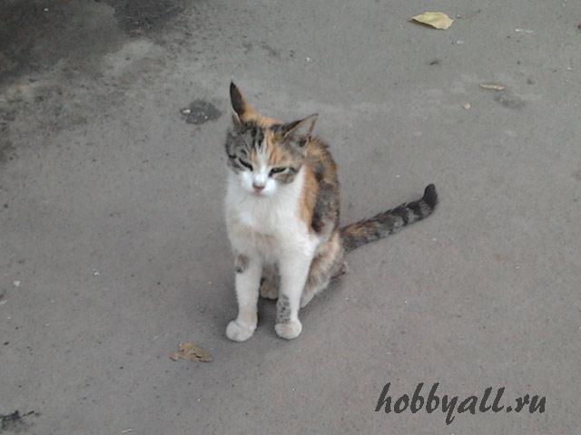 Одесские кошки-дворяне