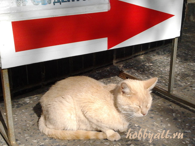 Одесский кот-дворянин