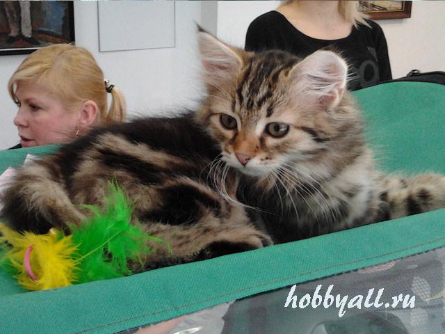 Экспонаты выставки котов в Одессе