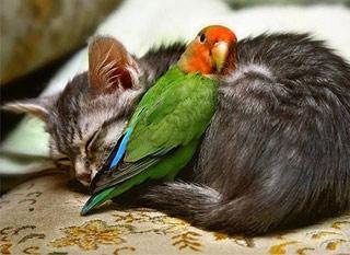 Вышивание крестиком. Кот и попугай