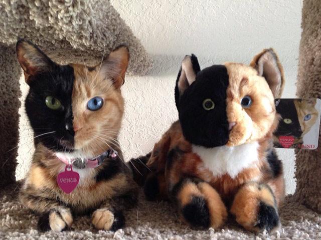 Кошка Венера с игрушкой-химерой