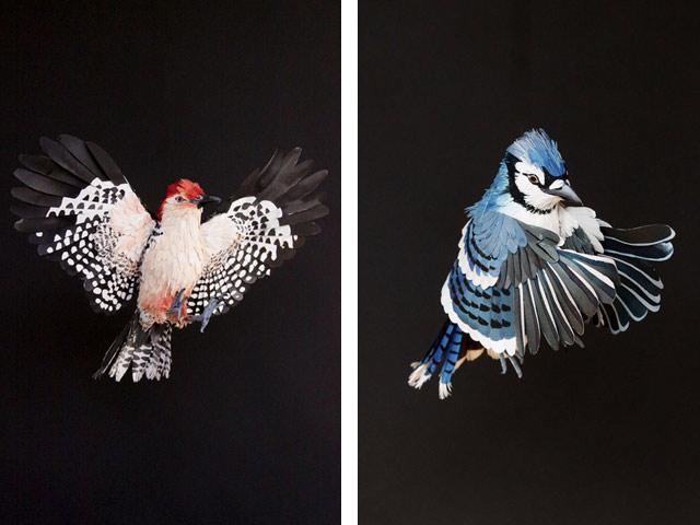 Диана Белтран Эррера: бумажная птица. Фото 11