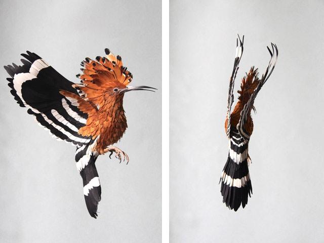 Диана Белтран Эррера: бумажная птица. Фото 13
