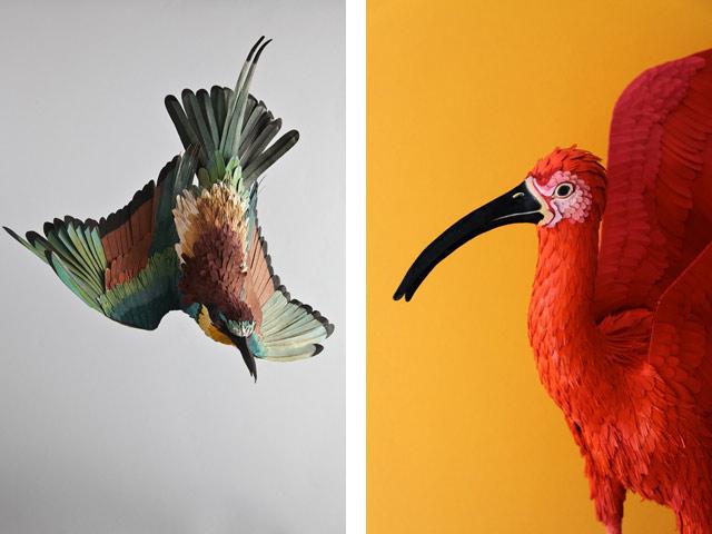 Диана Белтран Эррера: бумажная птица. Фото 15