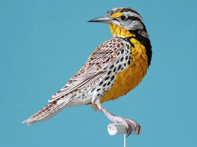 Диана Белтран Эррера: бумажная птица. Фото 8