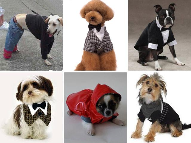 Хобби – одежда для животных