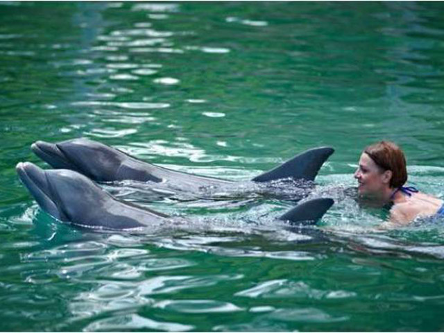 Хобби – плавание с делфинами