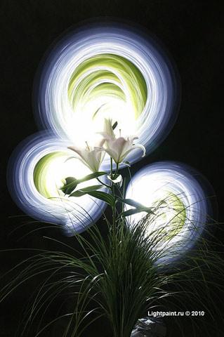 Фризлайт фото с лилиями