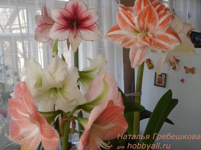 Комнатные растения названия и фото от