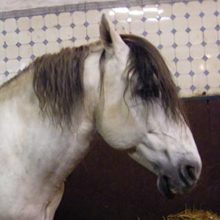 Вышивание крестиком. Голова лошади