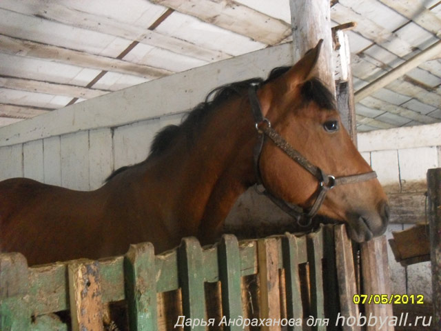 Лошади как хобби