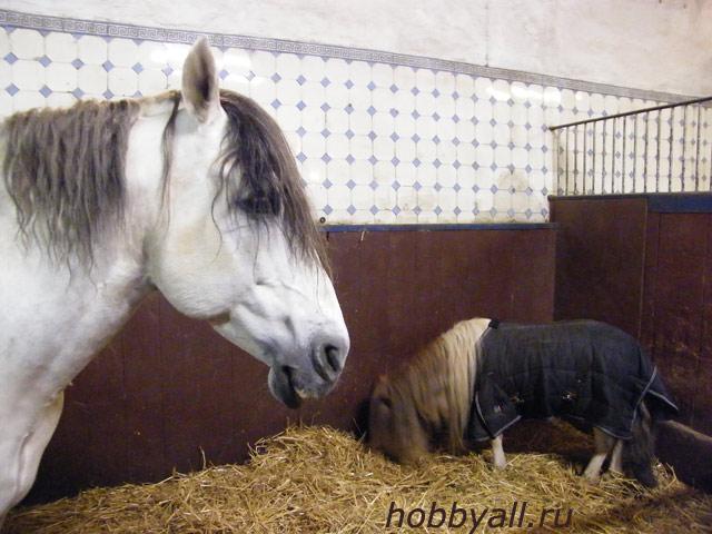 Лошадь с жеребенком. Конная школа в Buekeburge