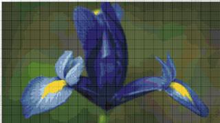 Вышивание крестиком. Синий Ирис