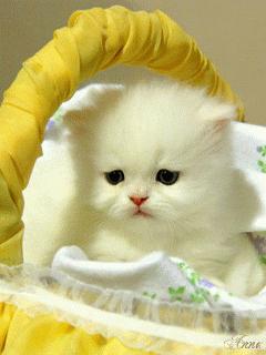Вышивание крестиком. Котенок