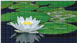 Вышивание крестиком: схемы Кувшинка на воде