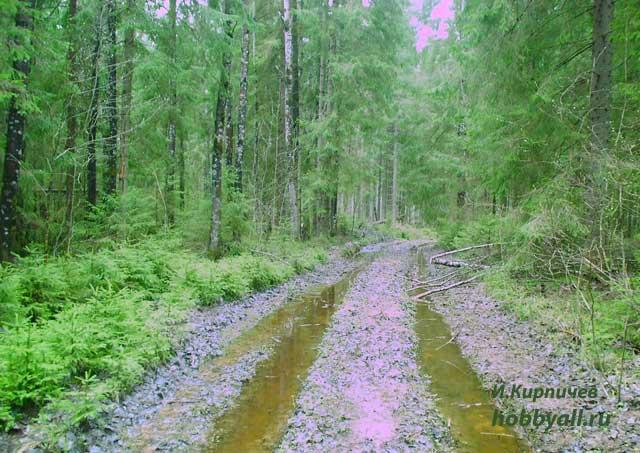 Прогулки на природе в поисках кладов