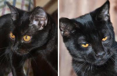 Хобби – кошки породы пантеретта