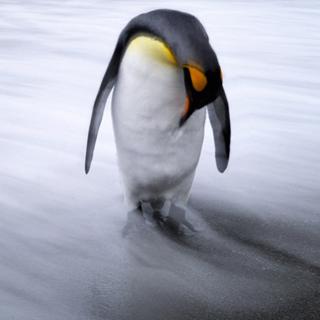 Вышивание крестиком. Пингвин