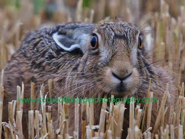 Хобби - диких фотография животных. Adam Tatlow. Фото 5