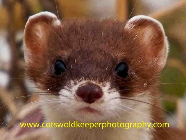 Хобби - диких фотография животных. Adam Tatlow. Фото 7