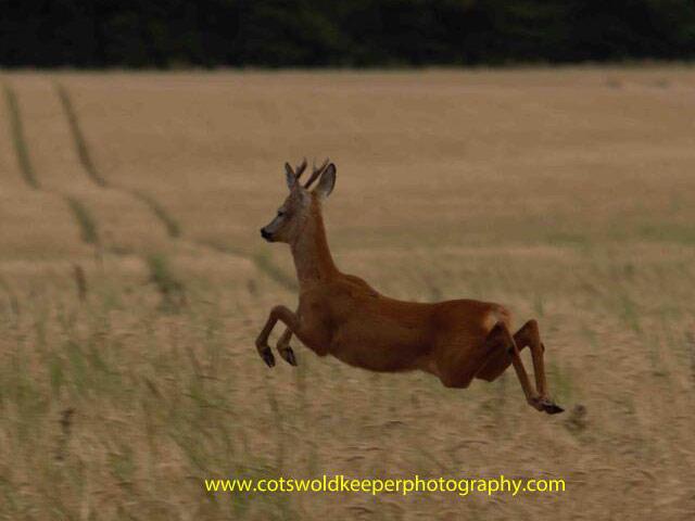 Хобби - диких фотография животных. Adam Tatlow. Фото 9
