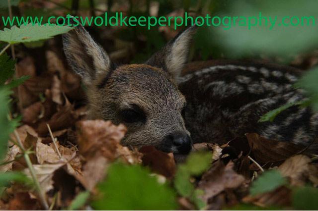 Хобби - диких фотография животных. Adam Tatlow. Фото1
