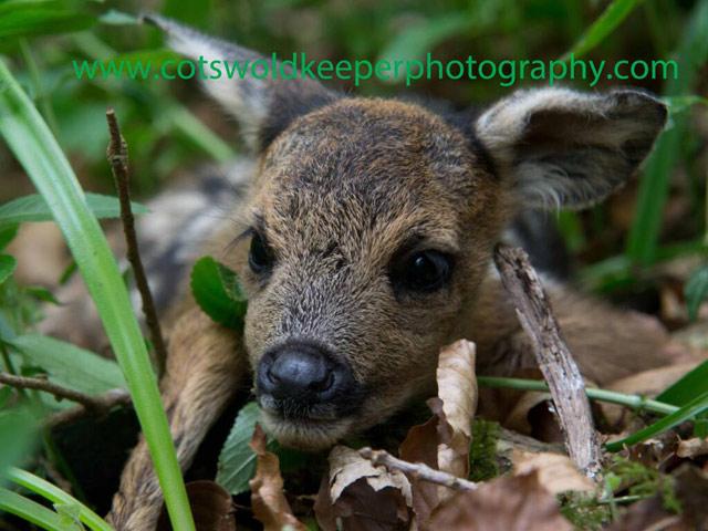 Хобби - диких фотография животных. Adam Tatlow. Фото 12