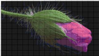 Вышивание крестиком: схемы Бутон розового цветка