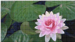 Вышивание крестиком: схемы Розовая кувшинка