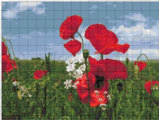 Вышивание крестиком: схемы Маки на поле, рис.2