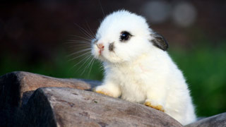 Вышивание крестиком. Кролик