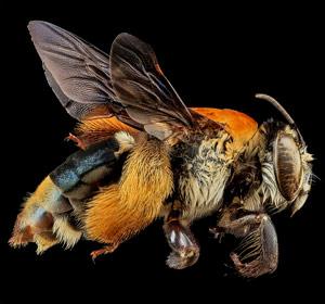 Фото насекомых Сэма Дроге