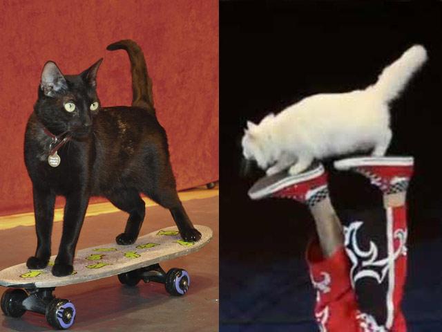 Кошки-артисты