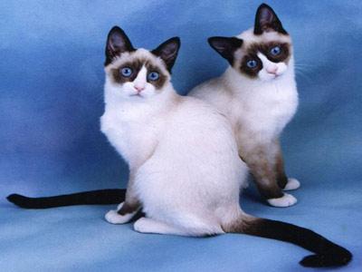 Хобби – кошки-белые туфельки, сноу шу