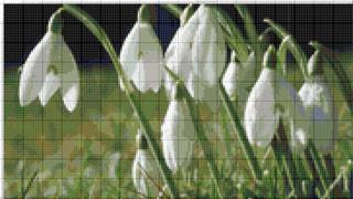Вышивание крестиком: схемы Подснежники