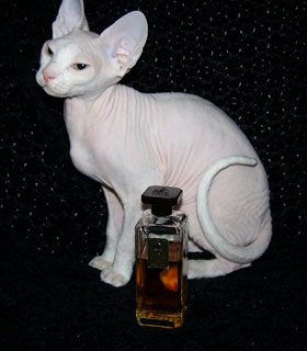 Вышивание крестиком. Кот сфинкс белый