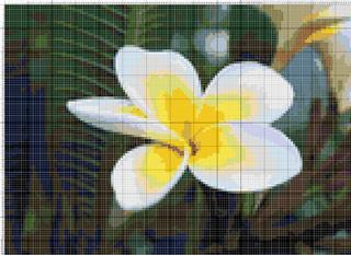 Вышивание крестиком. Белый цветок
