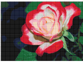 Вышивание крестиком: схемы Белокрасная роза